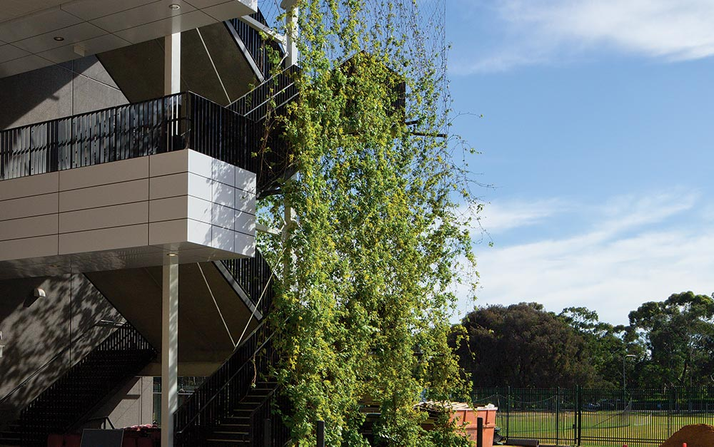 Adelaide Oval deciduous climbing vines supported by Rpnstan Cables and X-Tend Mesh