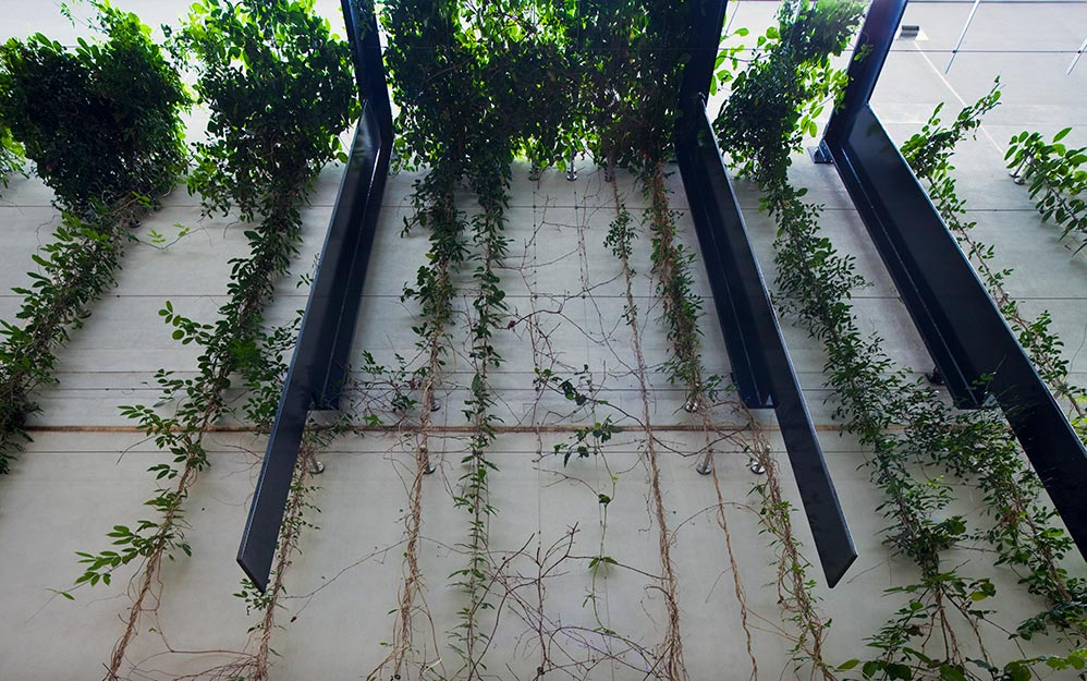 William Mccormack Place Ronstan Cable Trellis Systems
