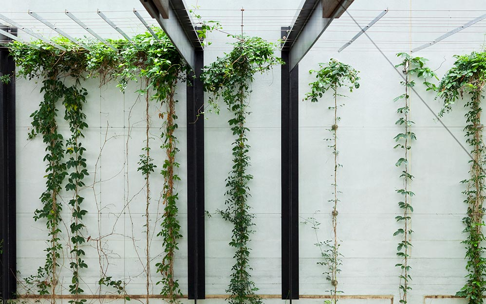 William Mccormack Place Cable Trellis System Ronstan