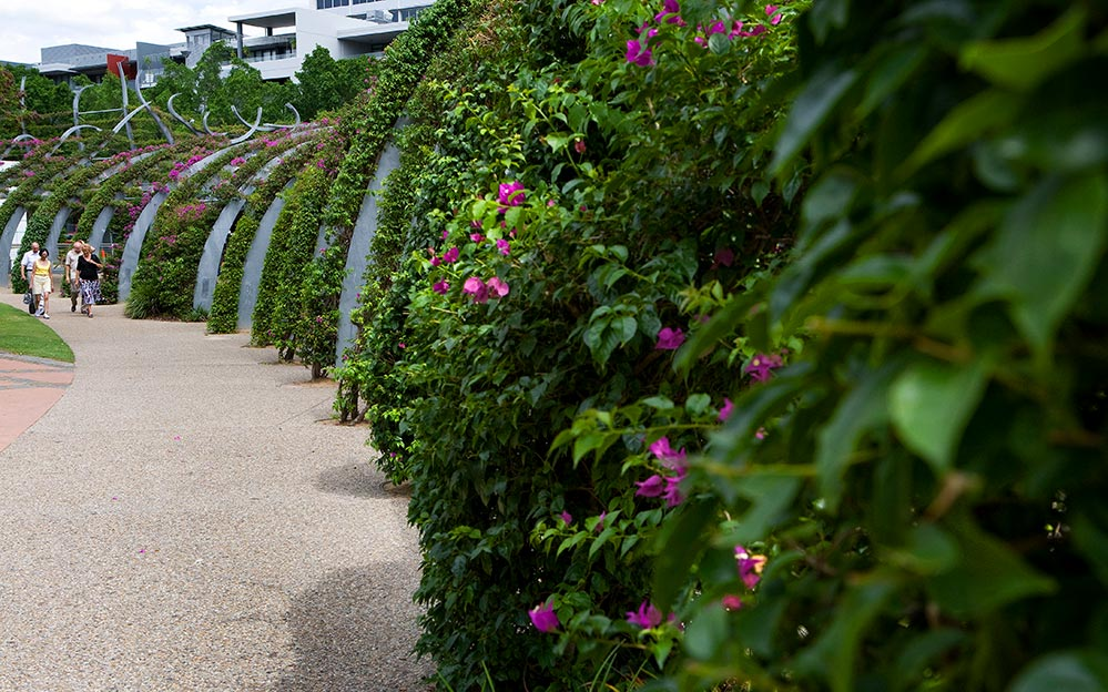 The vertical gardens of the Southbank Arbour have become a defining symbol of South Bank with its 443 curling, tendril-like columns of steel, each covered with a train of vibrant magenta bougainvillea plants.