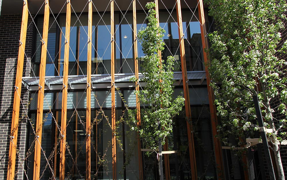 Ronstan Tensile Architecture supplied and installed the St. Catherine's School Greening Trellis to the new buildings as part of a large campus redevelopment.