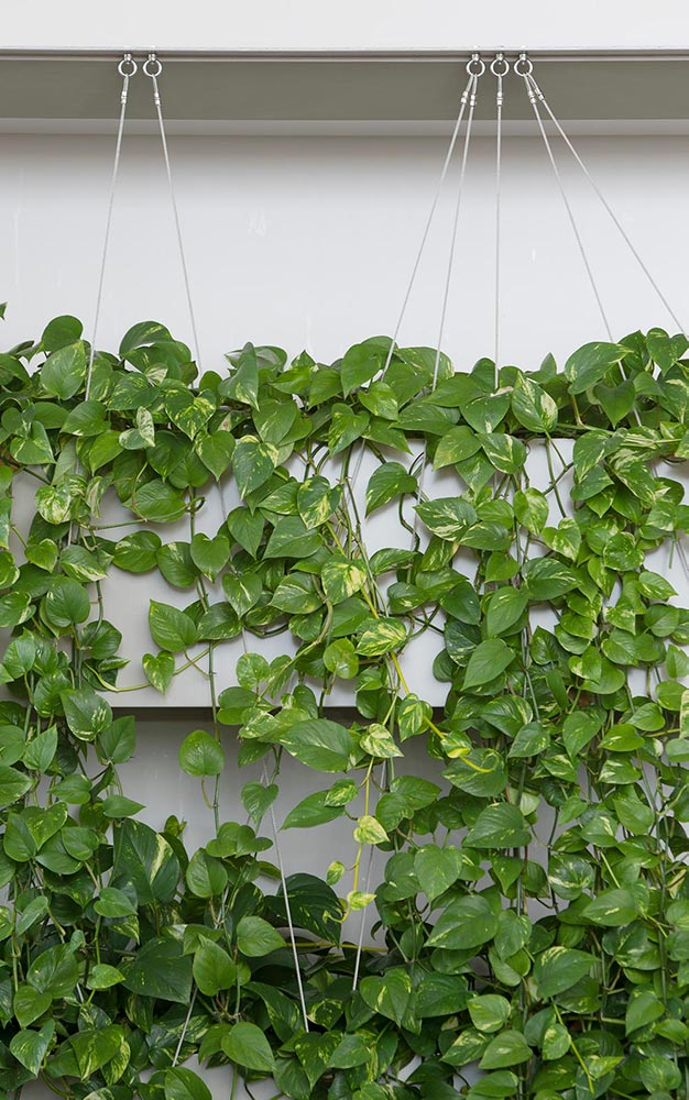 Ronstan's tensile stainless steel cables and other Ronstan elements were used to construct the project's four reception area greenwalls, seat planters in the pocket atria, and vertical and horizontal trellises in the Loggia section.