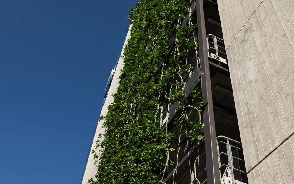 Exterior plant wall on tall building in NZ